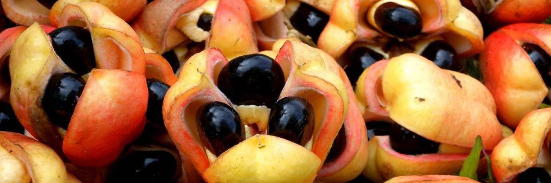 Akee-Frucht – Die 7 gefährlichsten Lebensmittel der Welt